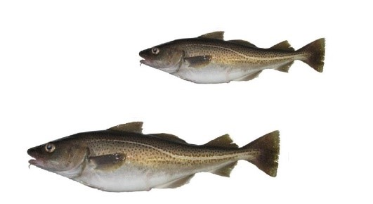 Fish dating Cape Breton