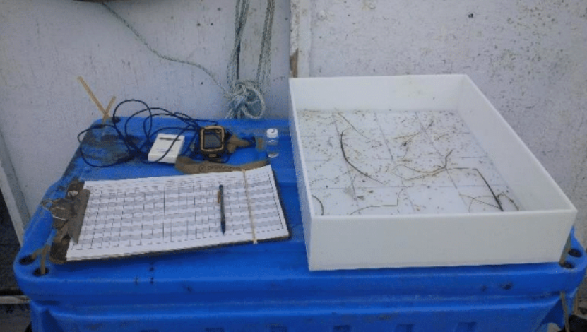 Grid tray to analyze and identify species caught during the larval tow.